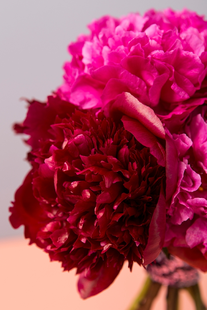 Everything you need to know about working with Peonies for your wedding or special event!