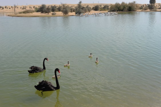 Al Qudra Lake - Things to do in UAE on a Budget
