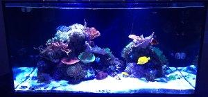 thomas soraci 120 gallon reef tank
