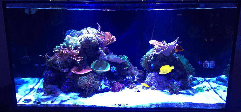 thomas soraci 120 gallon reef tank