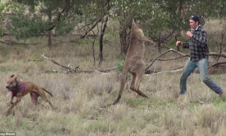 3b0b27ea00000578-4000266-after_the_dog_managed_to_escape_the_roo_s_clinches_the_man_and_m-a-44_1480907513902