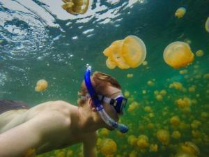 jellyfish-lake