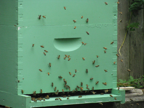 The Bees are Buzzing!