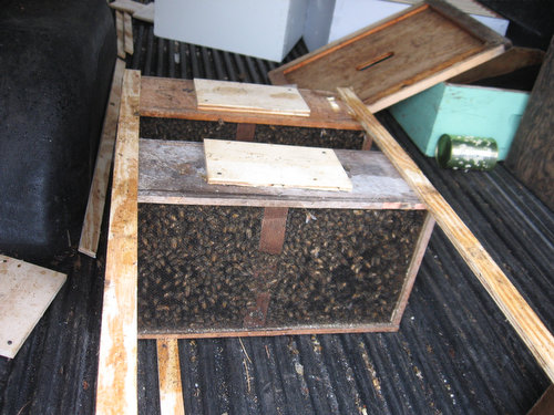 The Farm Gets New Bees