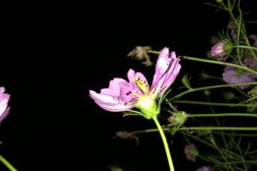 lj091815flowers01
