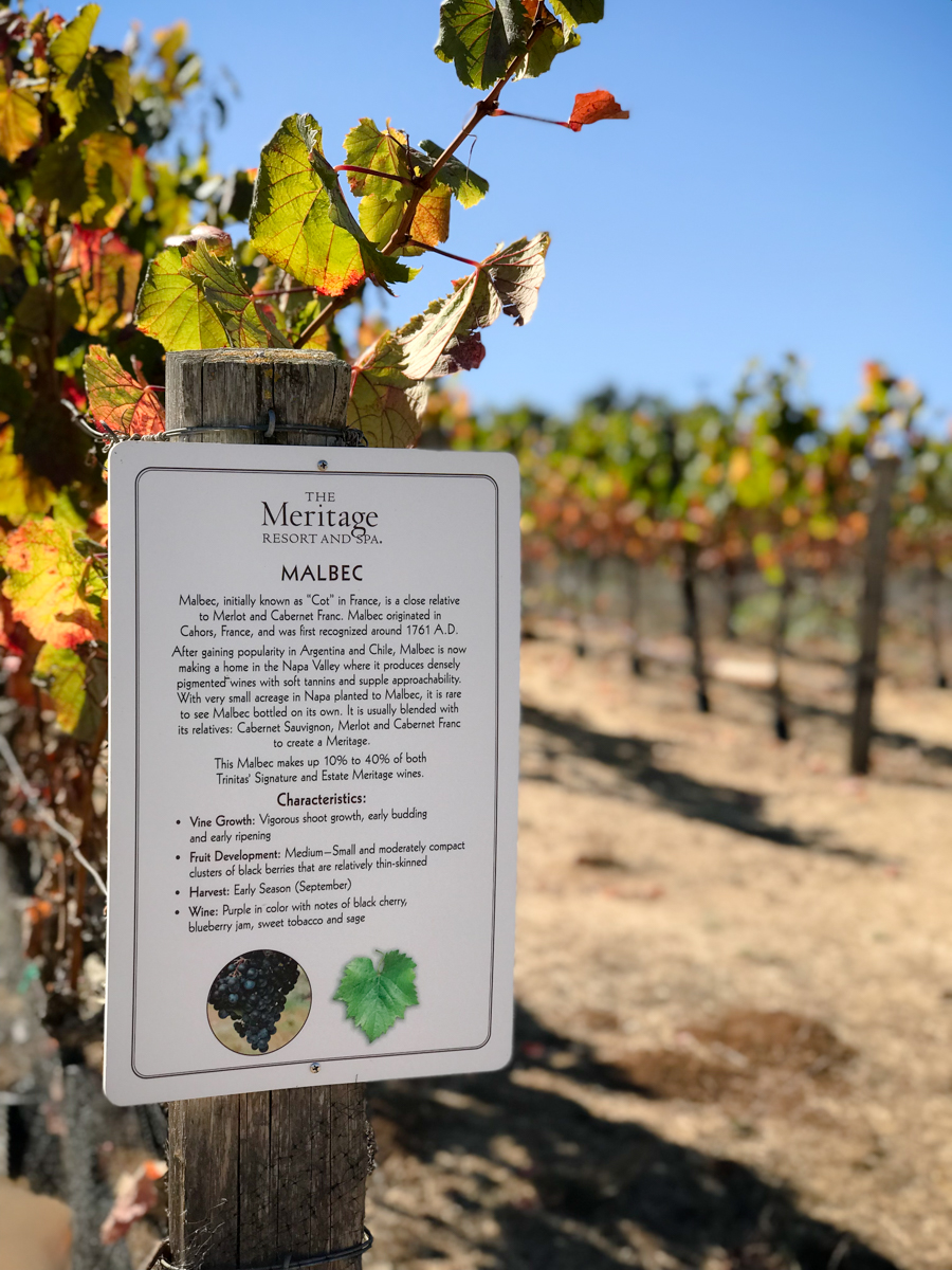 the-meritage-napa-valley-malbac-vineyards