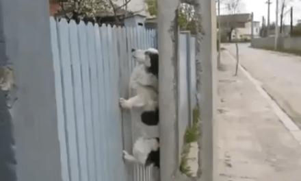Otro perro ninja que vuelve a casa siempre