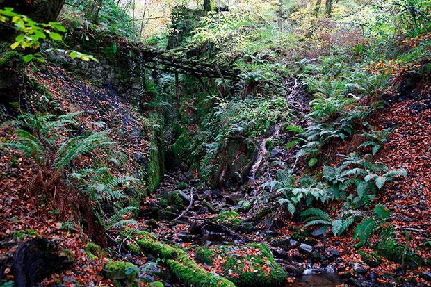 Hayedo de Hermo en el Parque Natural de las Fuentes del Narcea y del Ibias