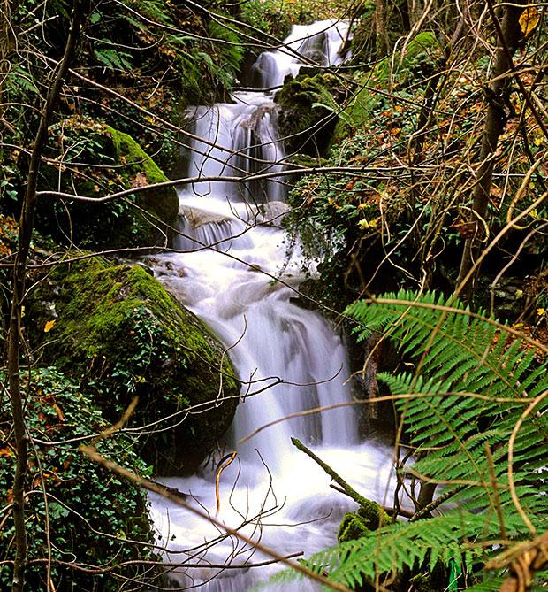 Reserva Natural de la Sierra de Ancares