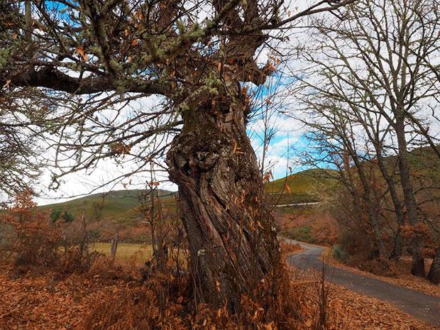 Paseo circular por el Valle de Ancares