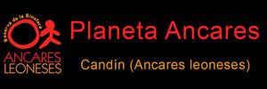 https://www.planetancares.es/
