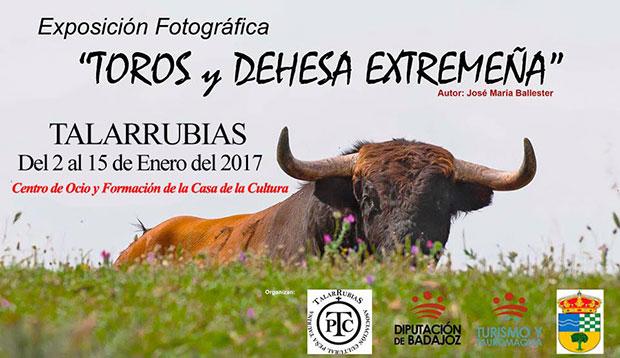Toros y -Dehesa de Extremadura