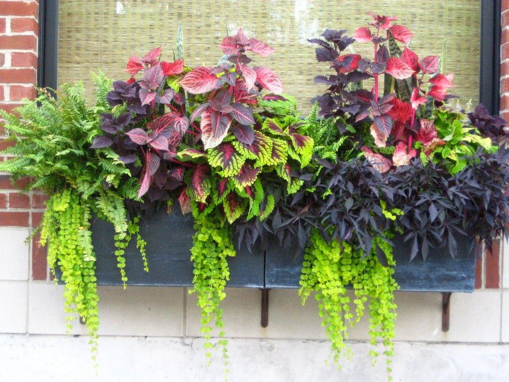 Fullsize Of Planter Garden Boxes