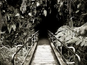 Tropical Tunnel by Toni Bennett