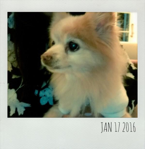 Polaroid Jan 17