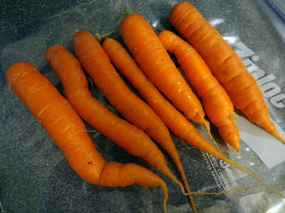 homegrown carrots for carrot cake