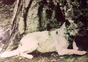 Mountain Mike dog