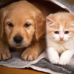 photos-of-cats-and-dogs-2
