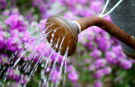 Το πότισμα είναι απαραίτητο και το χειμώνα, αν θέλετε τα φυτά σας να αντέξουν το κρύο!