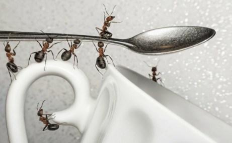 Ξεφορτωθείτε τα μυρμήγκια μια και καλή πριν αυτά κάνουν κατάληψη στο σπίτι σας.