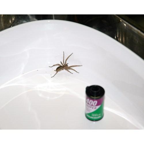 Medium Crop Of Do Spiders Poop