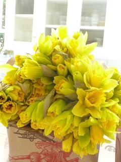 Daffodil Divinity