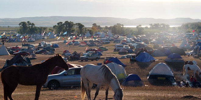 Horses graze early on the morning of Sept. 14, 2016, at the Oceti Sakowin camp near the Standing Rock Reservation in North Dakota, where thousands of people are camped in solidarity with the Standing Rock Sioux Tribe in opposition to the Dakota Access pipeline project. It's reportedly the largest gathering of Native Americans in more than a century. RNS photo by Emily McFarlan Miller