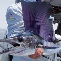 Birthday Bash Billfish