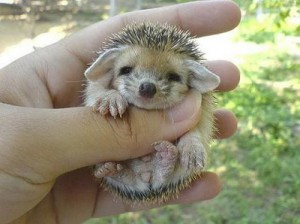 WTF: What?! A Baby Porcupine Hedgehog! » Allison Mack's Official Site (1/3)