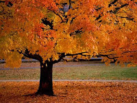 Fall Is a Great Time to Plant a Tree!