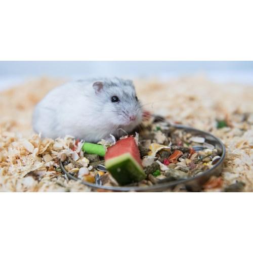 Medium Crop Of Can Rabbits Eat Watermelon