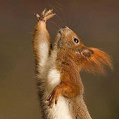 squirrel-jazz-hands-icon