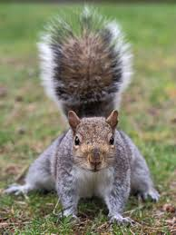 squirrel ready
