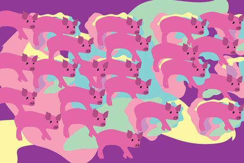 свиње-цртеж-свињогојство