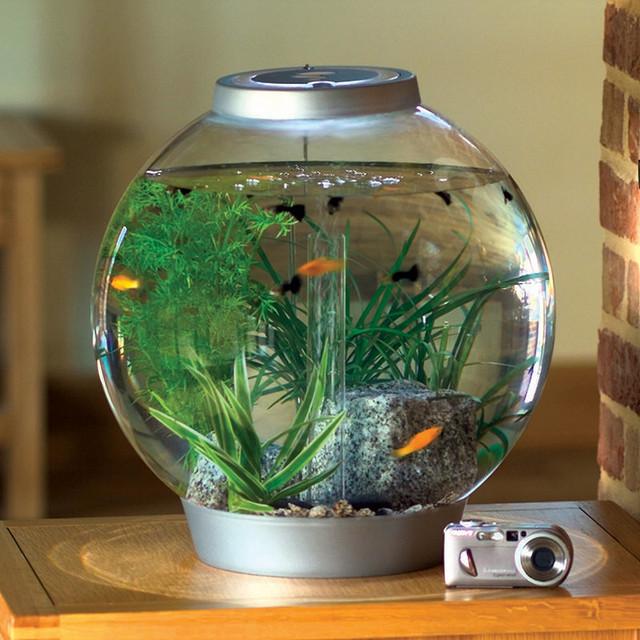 Mini BiOrb 4 gallon Aquarium   Traditional   Fish Supplies   by