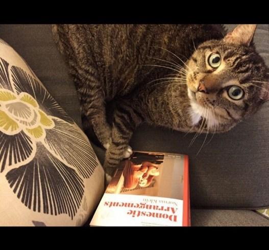 domestic arrangements cat
