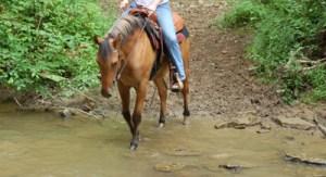 horse crossing water