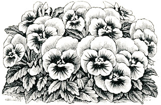 Freebie: Flower Digital Stamps