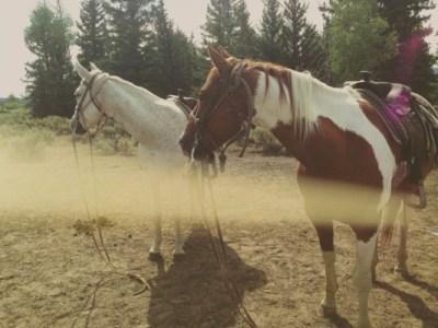 Kylie Jenner horse