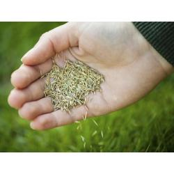 Small Crop Of St Augustine Grass Seed