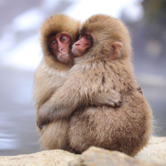 małpy przytulanie