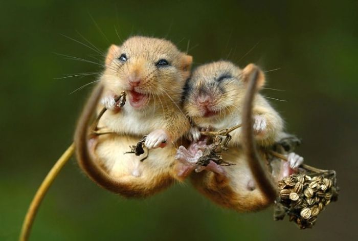 Śliczne Myszy przytulanie