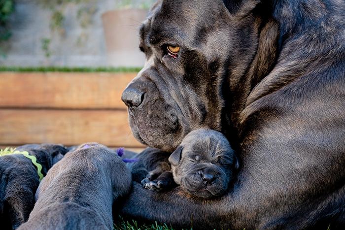 Nasa & Pups