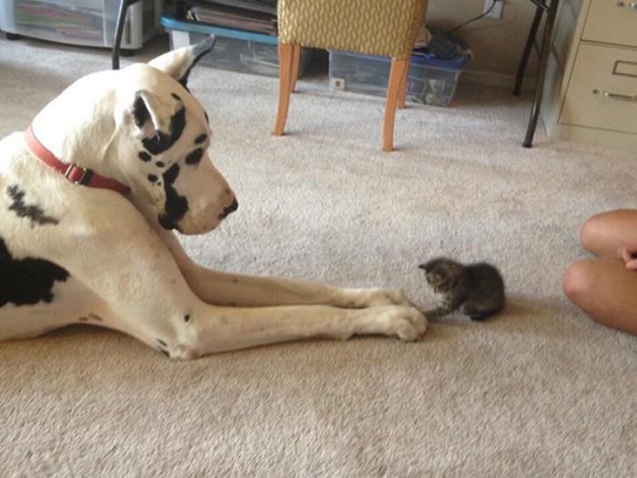 Louis Made A New Friend