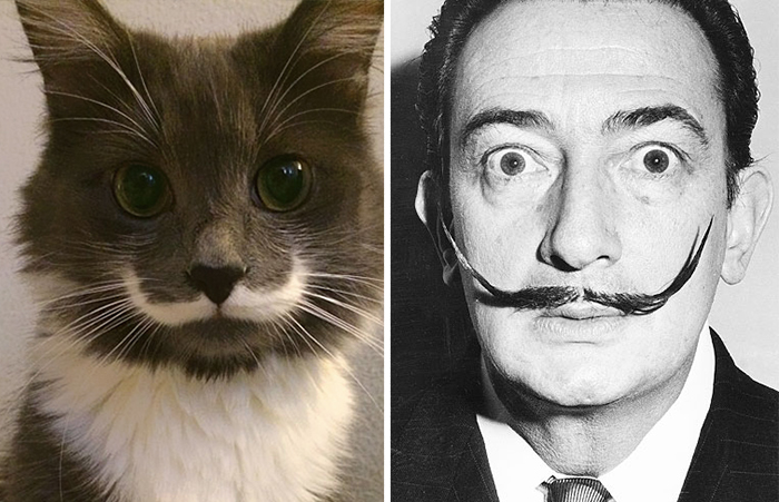 Hamilton Hipster Cat Wygląda Salvador Dali