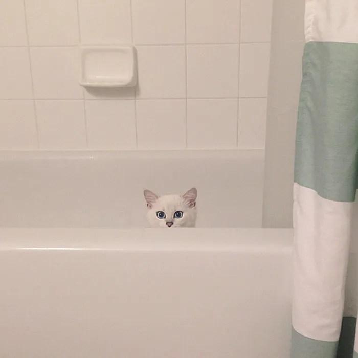 najbardziej piękne-eyes-cat-COBY-brytyjsko-krótkowłosy-47