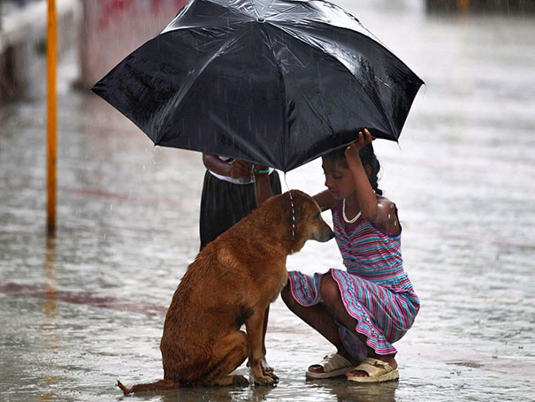 A Girl Uses Her Umbrella To Protect A Stray Dog During Monsoon Rains In Mumbai