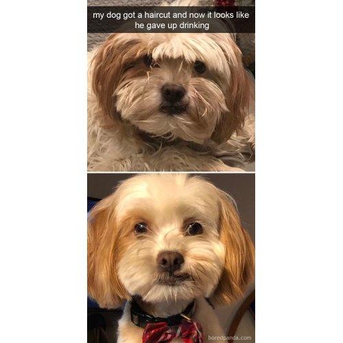 Medium Crop Of Dog Meme Avi