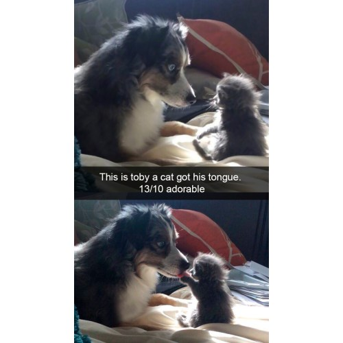 Medium Crop Of Funny Dog Pictures With Captions