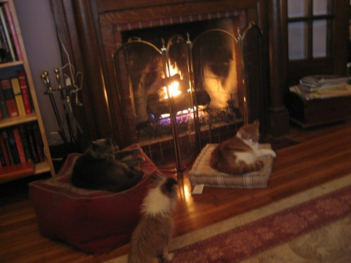 Cats by the fire